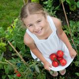 Mädchen mit gepflückten Tomaten © Gorilla